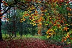Őszi erdő 2004 11 01 001sz1