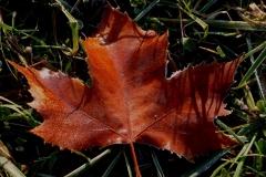 Őszi harmat
